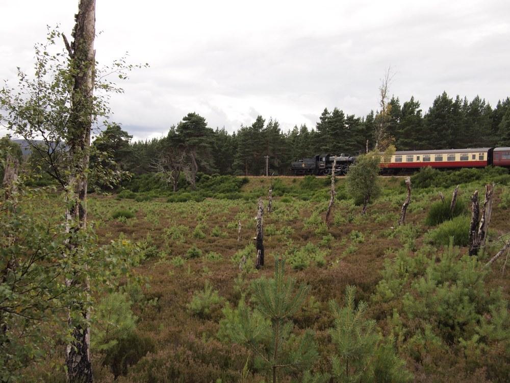 Die Strathspey Steam Railway auf dem Weg nach Aviemore.