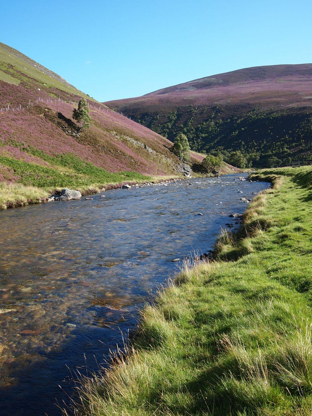 Typisch Cairngorms: Heidekraut am Hang, klarer Fluss, ein paar Bäume.